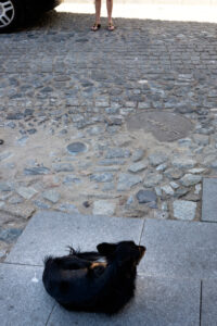 Perro sentado mirando a su dueña en Alentejo Portugal